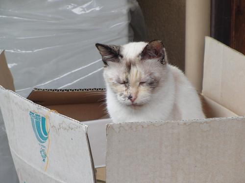 Today's Cat@2010-05-20