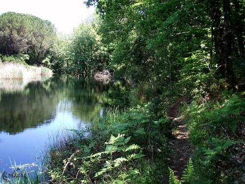 Trail des Maures 2010 (101)