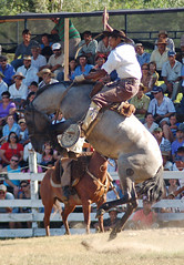 El morito, todava... (Eduardo Amorim) Tags: horses horse southamerica caballo uruguay cheval caballos cavalos pferde cavalli cavallo cavalo gauchos pferd pampa hest hevonen chevaux gaucho  amricadosul hst uruguai gacho  amriquedusud  gachos  sudamrica suramrica amricadelsur  sdamerika jineteada   americadel