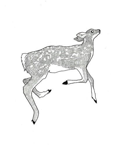 dead deer V