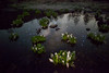 Three Worlds (masahiro miyasaka) Tags: flowers flower japan canon stars star galaxy astrophotography escher milkyway earthandsky threeworlds earthandspace Astrometrydotnet:status=failed eos5dmarkⅱ bestnewcomer competition:astrophoto=2010 Astrometrydotnet:id=alpha20100632542057