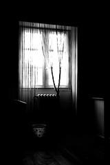 2010-BOUT D'ELLE (lolito de palermo) Tags: chambre contrejour fenetre