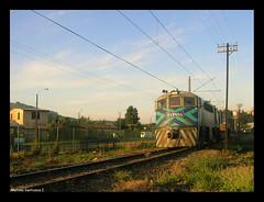 Paseos trensticos (Fepasas en la Araucania) Tags: tren temuco fepasa 16000 maltera
