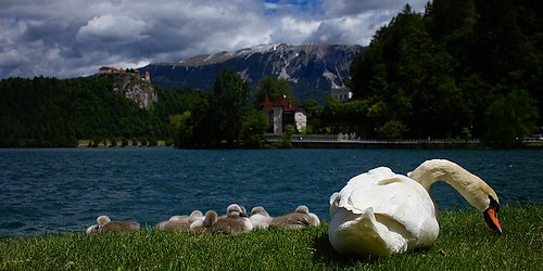 Picnic at Lake Bled, Slovenia