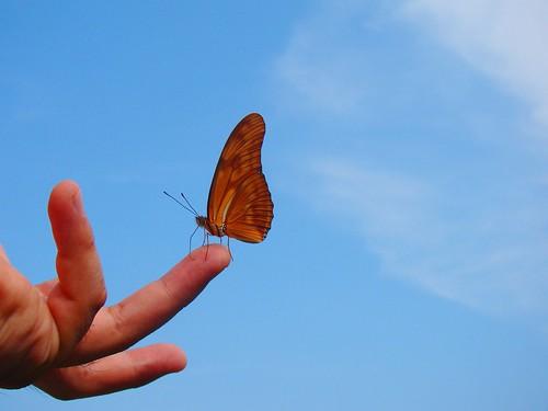 Mariposa en mi mano (9)