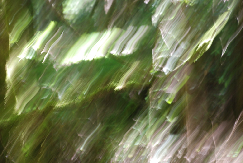 green tree blur