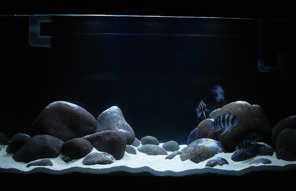 Cichlid Forum Type Of Rock For A Tanganyikan Setup