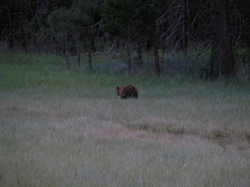Bear #4!!