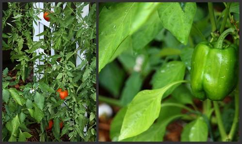 Vegetables 6.17.2010