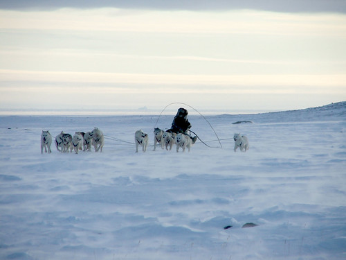 Qimmit - the mysterious disappearance of the Inuit's sled ...