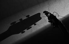 Duett (83/365) (pinterpi) Tags: shadow bw music white black wall canon project eos day guitar days string 365 ff zene fal fény fekete fehér gitár árnyék 450d pinterpi