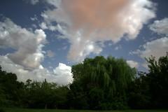 Cotton Candy Sky (deepintheforestcat) Tags: stars pinkclouds cottoncandysky brightnightsky