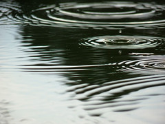 Rain drop reflection (Chickens in the Trees (vns2009)) Tags: green water rain circles drop droplet ripples raindrop