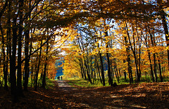 Autumn Leaves (Lucian Simionesei) Tags: park autumn europa europe autumnleaves romania toamna leafs parc iasi lucian roumanie copou simionesei afhht outstandingromanianphotographers