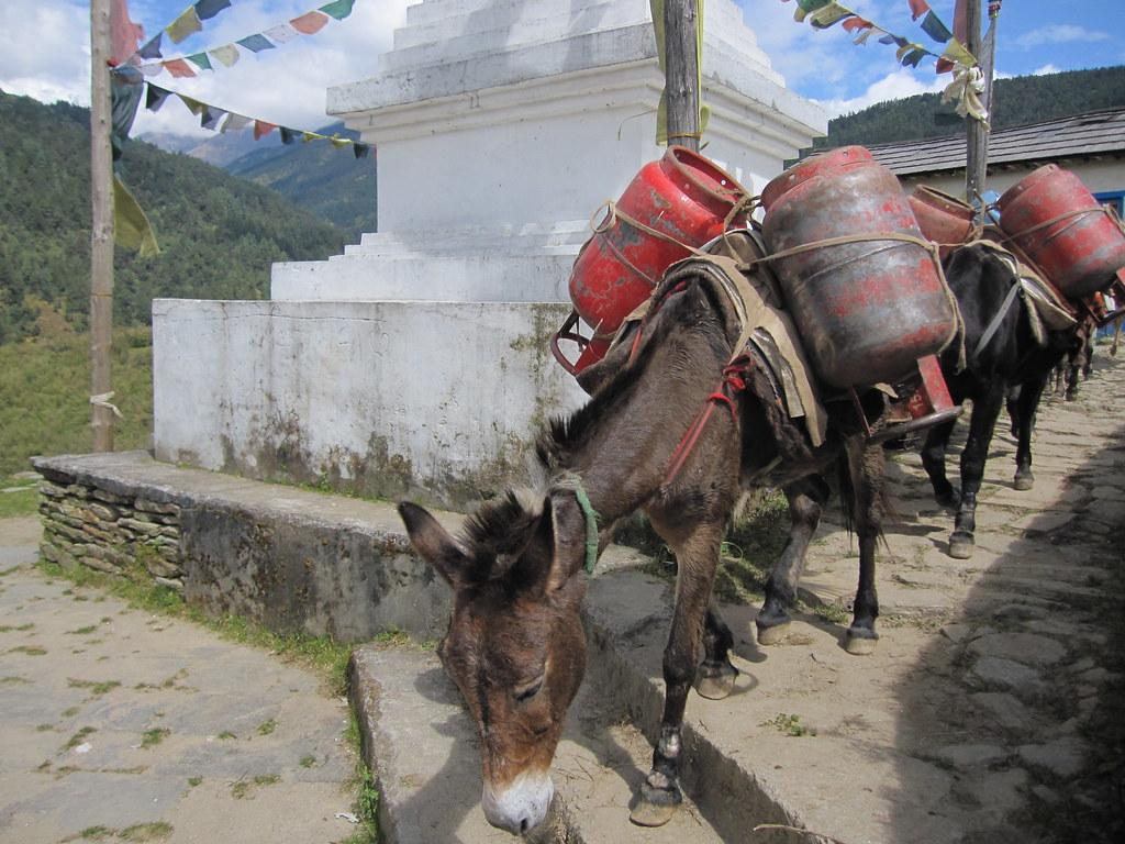 Donkey pipeline