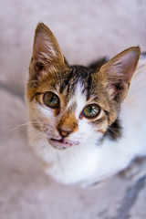 My new best friend (modenadude) Tags: 3 up cat canon hair happy is scary eyes friend kitten dof play looking close bokeh egypt kitty ears whiskers cairo adobe stare stray hungry usm staring f28 masjid lightroom 1755 550d masgid t2i