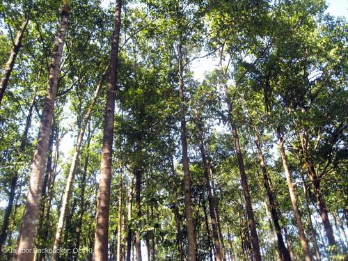 Tilagar Eco Park 2