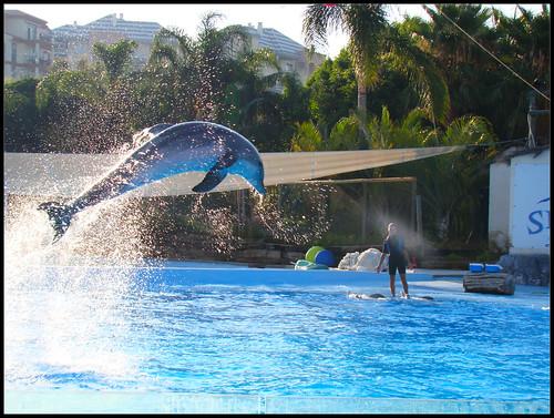 Espectáculo Delfines (7)