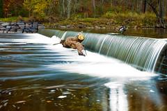 A Dam Long Exposure (Chris Potako) Tags: park water geese long exposure state dam goose tyler pa