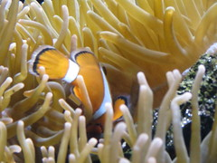IMG_0248 (Alejandro Perez M.) Tags: medellin parqueexplora acuario
