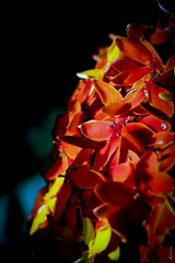 Petal shield (The Xporter) Tags: flower flowers beauty contrast black dark dslr photography fruit landscape portrait cool cute