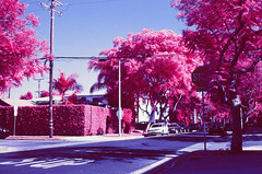 IR STOP (LeandroF) Tags: minoltasrt101 minolta analog film camera fpp infrared chrome e6 slidefilm thedarkroomlab color yellow10filter ir 45mmf2rokkor vintage 35mm slr infrachrome