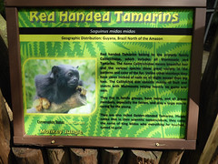 MonkeyJungle51 (alicia.garbelman) Tags: monkeyjungle florida homestead zoos signs tamarins
