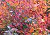 feuillage d'automne (b.four) Tags: autumn colors leaves automne feuilles gourdon alpesmaritimes blueribbonwinner coth feuillage flickrsbest bej anawesomeshot impressedbeauty impressedbyyourbeauty diamondclassphotographer flickrdiamond citrit cherryontopphotography rubyphotographer dragondaggerphoto mygearandme