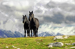 a couple of mountaineers... (sermatimati) Tags: family horses italy panorama animals montagne countryside nikon italia nuvole country natura neve gps paesaggi cavalli atmosfera animali abruzzo gransasso pascoli fattoria montanari allevamenti faunaitaliana montesanfranco animaliutili sermatimati montestabiata mygearandme mygearandmepremium mygearandmebronze mygearandmesilver mygearandmegold mygearandmeplatinum rememberthatmomentlevel4 rememberthatmomentlevel1 rememberthatmomentlevel2 rememberthatmomentlevel3 rememberthatmomentlevel5