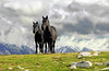a couple of mountaineers... (sermatimati) Tags: family horses italy panorama animals montagne countryside nikon italia nuvole country natura neve gps paesaggi cavalli atmosfera animali abruzzo gransasso pascoli fattoria montanari allevamenti faunaitaliana montesanfranco animaliutili sermatimati montestabiata mygearandme mygearandmepremium mygearandmebronze mygearandmesilver mygearandmegold mygearandmeplatinum rememberthatmomentlevel4 rememberthatmomentlevel1 rememberthatmomentlevel2 rememberthatmomentlevel3 rememberthatmomentlevel9 rememberthatmomentlevel5 rememberthatmomentlevel6 rememberthatmomentlevel10