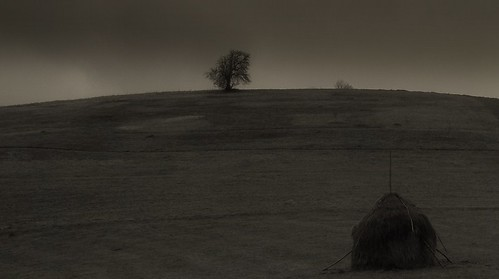 Joshua Tree (2)