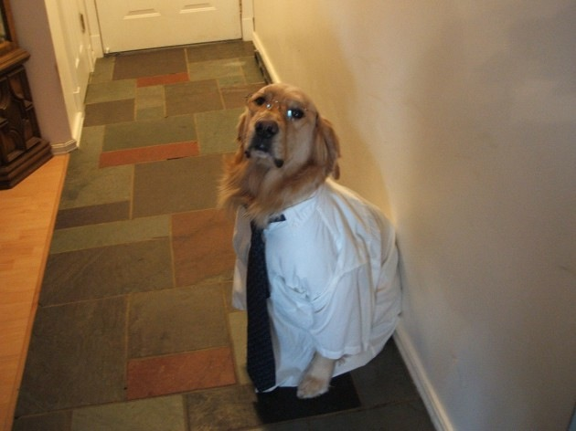 dog-in-a-shirt-and-tie-and-glasses-630x472
