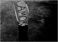 Amor ♥ (Jean Pereira) Tags: dof jean kodak amor pb easy share ♥ pereira