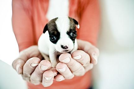 Thumb Perrito entrenando su mirada tierna …