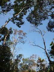 Rainforest, Lowacherra National Park, Srimongal (shaun shooter) Tags: rainforest srimongal lowacherranationalpark