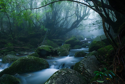 フリー画像| 自然風景| 河川の風景| 森林/山林| 屋久島| 日本風景| 世界遺産/ユネスコ|     フリー素材|