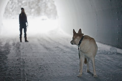 coming? (eyebex) Tags: winter dog snow k animal t deleted6 delete7 tammy tunnel saved10 explore 106 domestic save10 frontpage tee culvert kolya savedbythedeltemeuncensoredgrou cool7 uncool3 iceboxcool savedbydeletemeuncensored107