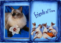 *Friends of Tom*