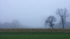 They say it is Blue Monday today.... (joeke pieters) Tags: mist holland netherlands landscape nevel foggy nederland enjoy achterhoek winterswijk gelderland geniet aroundhouse woold abigfave rondhuis