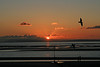 A Classic Sunset? (judibluemed) Tags: uk sunset orange seagulls beach westsussex lovers beg easthead beautifulcapture impressedbeauty impressedbyyourbeauty iltramontothesunset lizasenchantingphotogarden