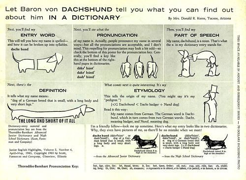 Dachshund Education