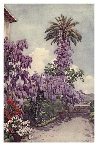 014-Wistaria en la Quinta da Levada Madeira-The flowers and gardens of Madeira - Du Cane Florence 1909