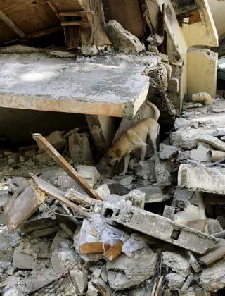 Terremoto de Haití, iae ONG