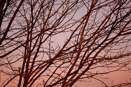 branchy love