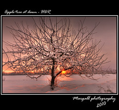 Apple tree at dawn - HDR (Margall photography) Tags: morning winter italy sun snow tree ex apple del photoshop canon photography dawn gallo dc san italia alba 10 sigma piemonte neve pro marco 20 sole albero inverno cuneo hdr pietro mela 30d mattino cs3 photomatix galletto margall