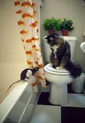 oh hi. (tlong) Tags: cat mouse bathroom rat funny mitty