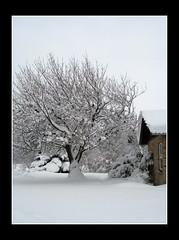 snevejr_030210 (50) (fruNielsen (Helle Klitgaard)) Tags: snow cold ice denmark vinter februar sne arden kold frunielsen helleklitgaard