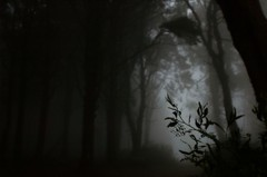 (t3mujin) Tags: d70 portugal sintra forest trees dark gloomy haunted leaves blur fav10