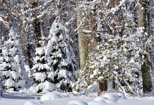 Snowy Jersey