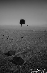 (Shrf AlMalki..) Tags: tree nature dead death desert drought lonely minimalism  agreed      shrf   almalki